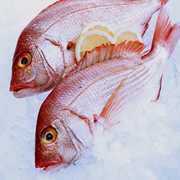fish on ice